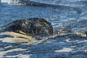 Refugio Oil Spill, May 19, 2015 photo by Zackmann08